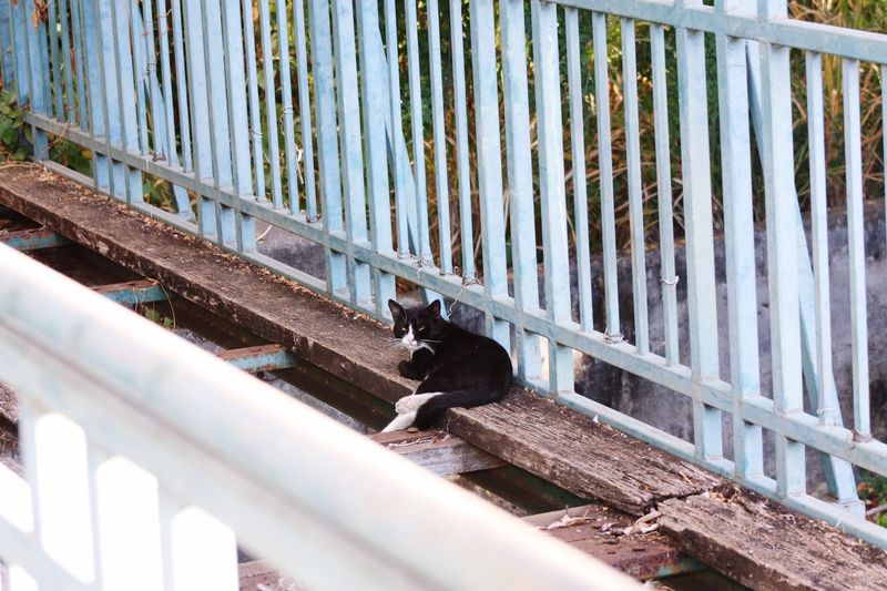Cat On Old Bridge