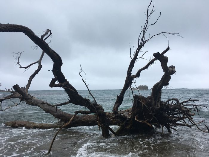 Dominica Bare Tree Beauty In Nature Branch Day Dead Plant Dead Tree Dried Plant Horizon Over Water Nature No People Outdoors Scenics Sea Sky Tranquility Tree Water