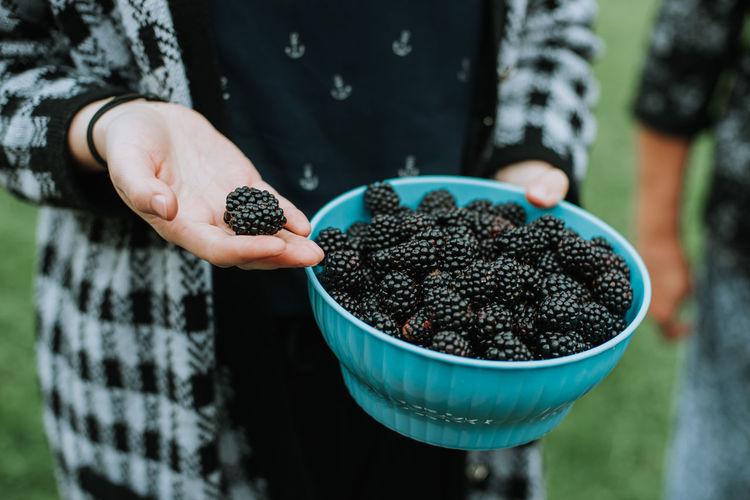 Holding fresh organic picked blackberry fruit from the garden