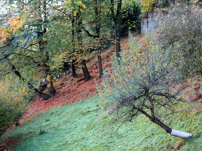 Colors Of Autumn Emmental🇨🇭 Photography October 2017 Autumn🍁🍁🍁 Beauty Beauty In Nature Day Forest Green Grass 🌱 Landscape Nature No People Outdoors Red And Yellow Leaves Sandstone Wall Scenics Tranquility Tree Perspectives On Nature