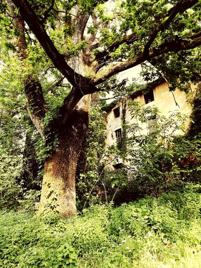 Ancient Tree Ancient House Boschi Di Carrega Landscape Italy Summertime Nature Tree Backgrounds Full Frame Sunlight Close-up Grass
