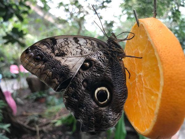 EyeEm Selects One Animal Animal Themes Animals In The Wild Close-up Animal Wildlife Bird