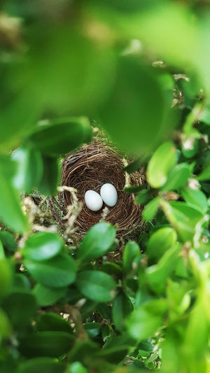 Animal Themes Animals In The Wild Beauty In Nature Beginnings Branch Close-up Day Fragility Green Color Growth Leaf Nature No People Outdoors Tree Egg Egg White Birds Of EyeEm  Birds Minimalist Architecture Perspectives On Nature Be. Ready.