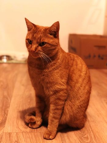 Domestic Cat One Animal Mammal Domestic Animals Pets Feline Animal Themes Cat Sitting Indoors  No People Day