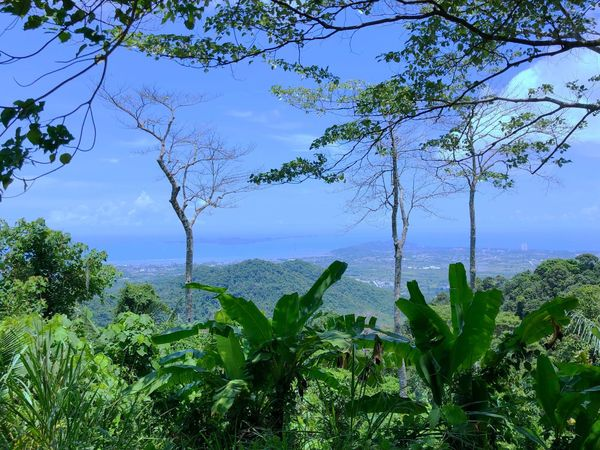 Mountain Ko Samet Plant Tree Growth Sky Water Beauty In Nature Nature Green Color Tranquility Tranquil Scene Scenics - Nature No People Day Sea Outdoors Non-urban Scene Land Sunlight