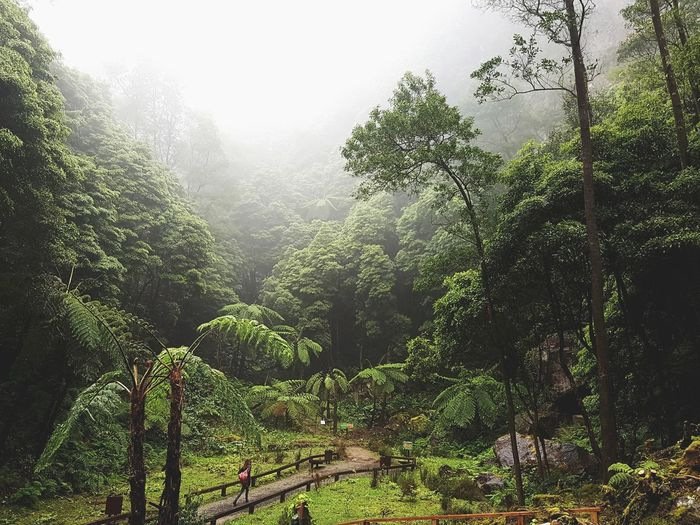 Azores Azores Islands Volcanic Landscape Volcano Landscape Mountain Fog Forest Sao Miguel- Azores São Miguel - Açores Hot Springs Natural Springs Azores Islands