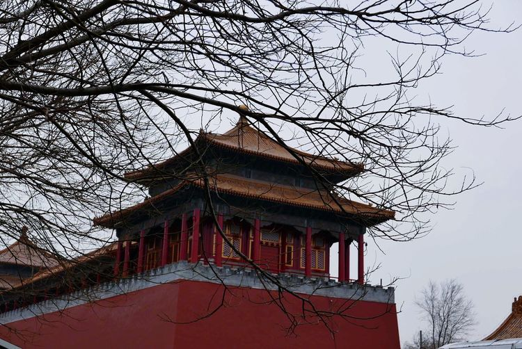 Emperors home. Palace Imperial Palace Imperial Landmark China Beijing, China Beijing Pekin ASIA Tourism Visiting International Landmark Tree Nature Trees Winter