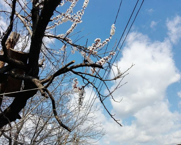 Low Angle View Tree Sky Nature Branch Close-up No People Outdoors Beauty In Nature Edited By @wolfzuachis Wolfzuachiv Showcase: March Eyeem Market @WOLFZUACHiV Showcase: 2017 Veronicaionita Huaweiphotography On Market Wolfzuachis Veronica Ionita Apricot Blossoms Apricot Tree Apricot Tree Blossomed Uppon Blue Sky