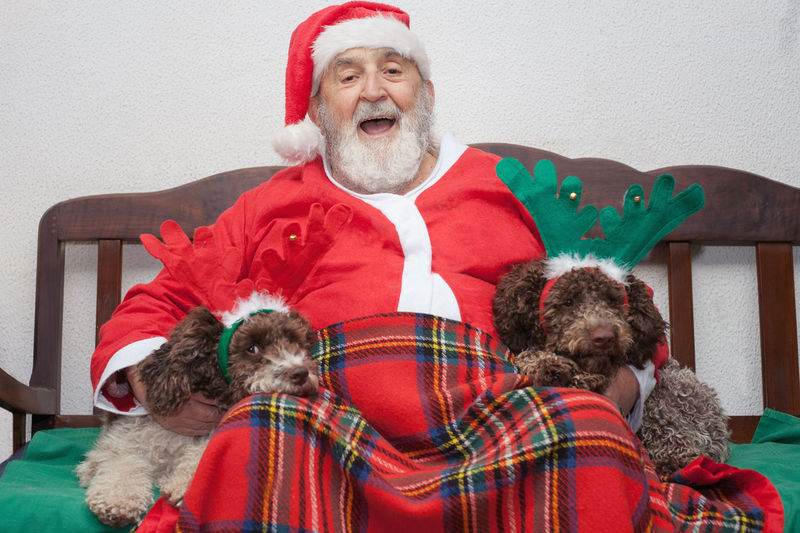 Portrait Of Happy Senior Man In Santa Claus Costume With Puppies Sitting On Bench