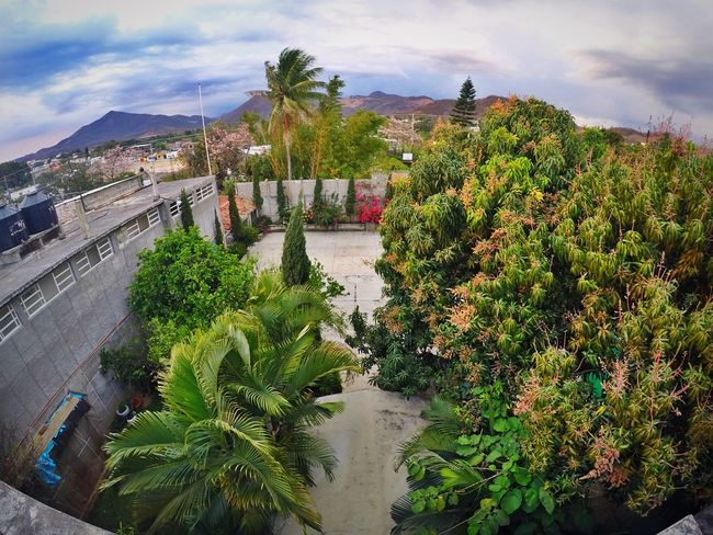 Goprohero4 Gopro Shots Goprooftheday Gopro Home Home Sweet Home Nature Nature_collection EyeEm Nature Lover Green