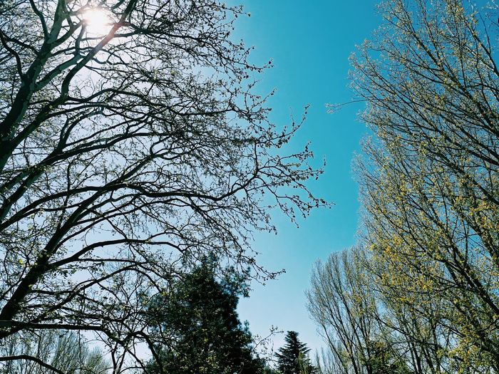 Tree Low Angle View Sky Beauty In Nature No People Sunlight Nature Flying Outdoors Day Clear Sky Large Group Of Animals Close-up Georgia Eye4photography  Ilovemyfollowers 2017 Ilovephotography Love To Take Photos ❤ Beauty In Nature April Nature Eye4photography  School Biology Class