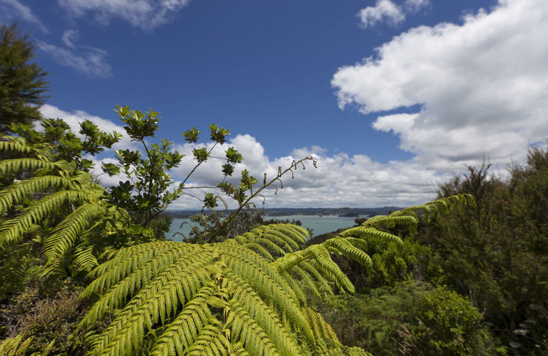 Bay of Islands with blue Sky and white Clouds - View from Flagstiff Hill in Russell, Northland, North Island, New Zealand Bay Of Islands Beauty In Nature Blue Sky White Clouds Coastline Fern Flora Forest Freshness Frond Growth Landscape Landscape_Collection Landscape_photography Leaf Leaves Nature New Zealand New Zealand Scenery No People North Island Northland Panorama Scenics Tree Tree Fern