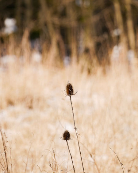 Nature_collection Munich, Germany Wintertime Wälder Wald Nature Photography Natur Plants Flower Nature Plant Uncultivated Outdoors Field Beauty Rural Scene Summer Growth Beauty In Nature Arid Climate Landscape No People Flower Head Grass Closing