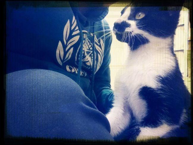 Catsagram Caturday xD OBEY Gato =^,^=