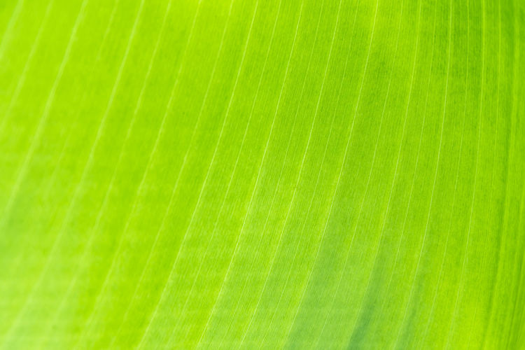 Beautiful Bright Green Light Natural Nature Plant Abstract Art Backgrounds Closeup Decorative Focus Foliage Leaf Leaves Macro Material Paper Pattern Texture Vibrant Wallpaper