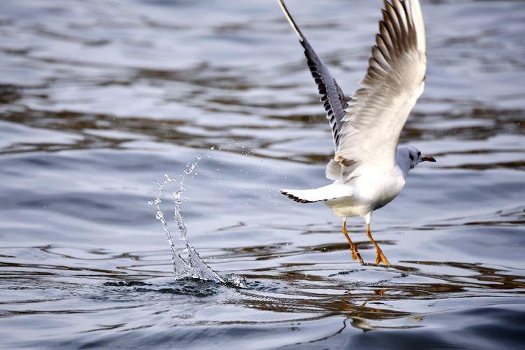 Take off! Bird