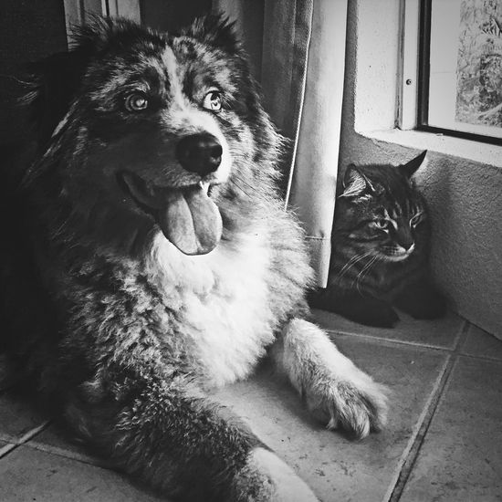 Thunder and lightening, very very frightening! But at least I have my best friend beside me Fur Friends My Dog Koda my cat Oscar