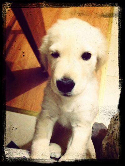 Hello World Goldenboy Ilovemydog Cheese!