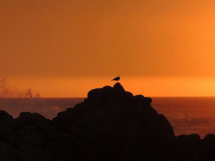 Sunset Sunset On The Rocks Bird At Sunset Sea And Rocks Seagull On The Rock One Bird Orange Sunset Sky Scenics - Nature Silhouette Horizon Over Sea Simple Moment Enjoying The View Lovely Sunset The Purist (no Edit, No Filter) Beautiful Scenery