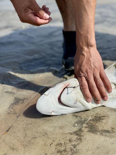 Fisherman getting ready to unhook an atlantic sharpnose shark