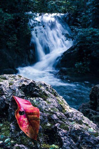 Water Waterfall Forest Landscape