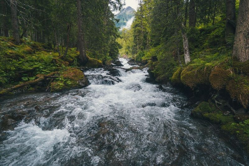 Flowing Water Forest River Nature Scenics Waterfall No People Beauty In Nature Tranquility Water Tree Outdoors Tranquil Scene Day Stream - Flowing Water Motion Österreich Schladming Fluss Berge Alpen Tourismus Wandern Outdoor