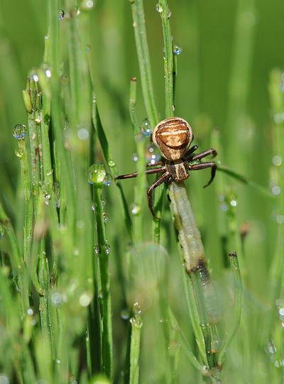 Close-Up Of Spider On Wet Grass