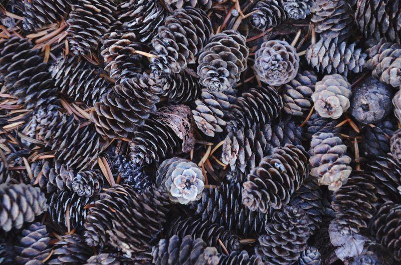 Full frame shot of pinecones