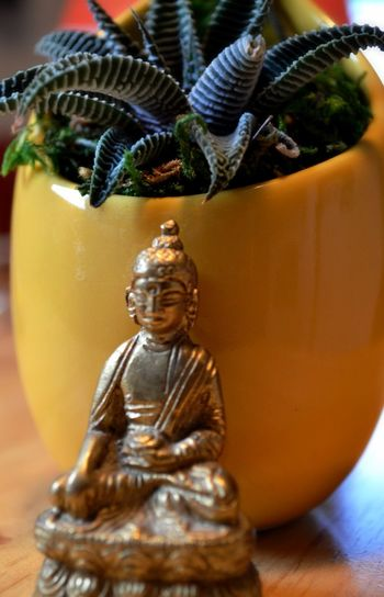 Showcase: January Nikon Succulent Plant Tiny Brass Medicine Buddha Buddha Statue Yellow Vase Close-up Plant Moss Complimentary Home Decor Eastern Religions Belief Faith Getting Inspired Nikonphotography