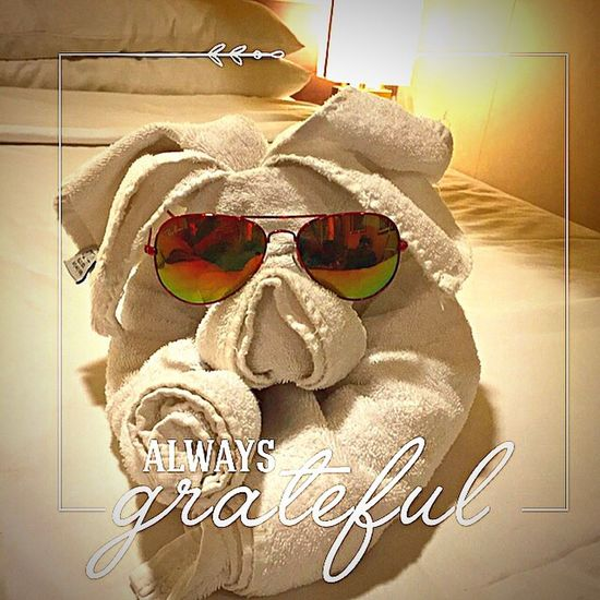 Thanks to Mr. Issa Habibo ... You made my room so cool... With this cute little guy🐶 Towel Creation Animal Towel Verycute Very Creative Smart Ideas Taking Photo Cute Little Guy Feeling Inspired Enjoying Life