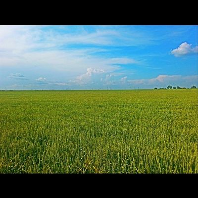 Ovojezr Vojvodina Ilovezr Plain ig_sky
