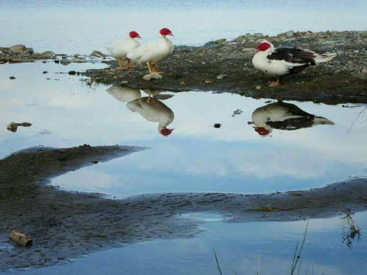 Water Waterreflections  EyeEmNewHere EyeEm Nature Lover Extraordinary Nature Beauty In Nature Nature Is Art Animals