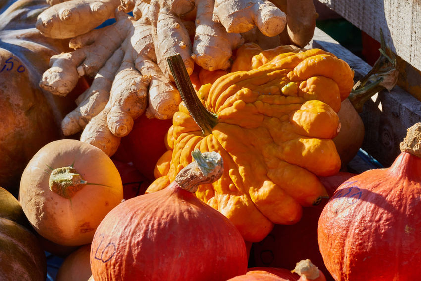 Arrangement of colorful mini pumpkins and other vegetables on a local market. Colorful Eatng First Eyeem Photo Freshness Green Color Healthy Local Landmark Low Carb Nature Nature_collection Orange Color Pumpkin RGanimals Vegetable