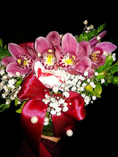 Birthday Flowers Bow Flower Black Background Pink Color Studio Shot Nature Close-up Freshness Flower Head