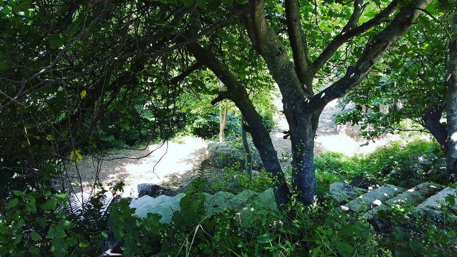 Kastamonu Ilyasbey Köyü Nature Tree Light