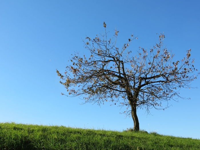 Photography October 2017 Emmental Switzerland Beauty In Nature Blue Branch Clear Sky Day Field Grass Landscape Nature No People Outdoors Scenics Sky Tranquil Scene Tranquility Tree Perspectives On Nature