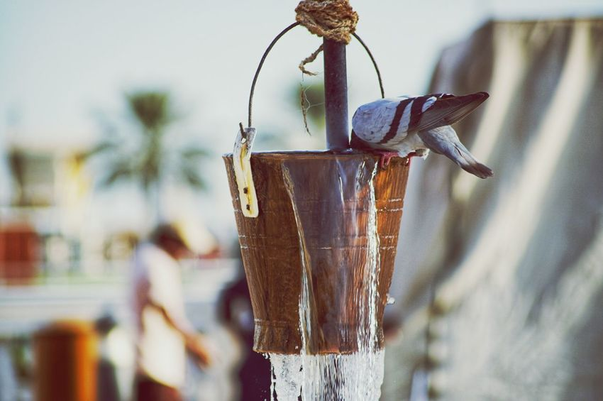 Water Hanged Eyeem Philippines Doha,Qatar Qatar A6000photography A6000 Sony Alpha Dove Bird Thirsty  No People Hanging Close-up Day Outdoors
