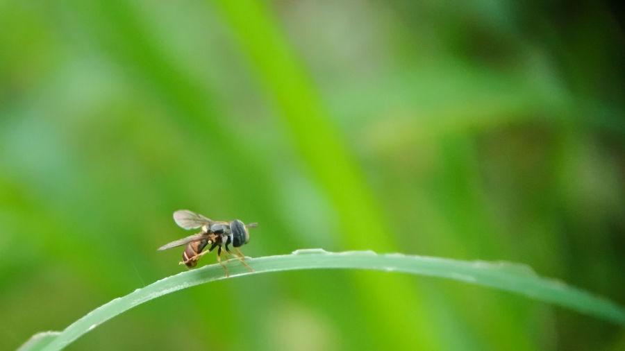 Litle bee Bee