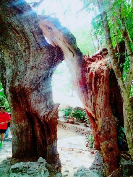 Rayo árbol Naturaleza Hermoso