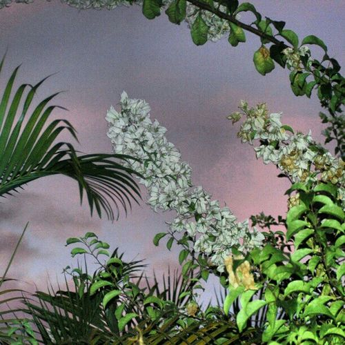 Atardecer Flores Cielo De.colores First Eyeem Photo