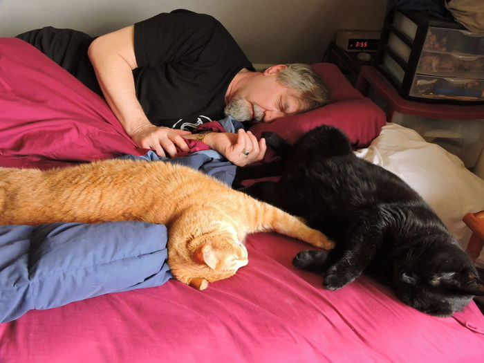 Senior man sleeping with cats on bed at home