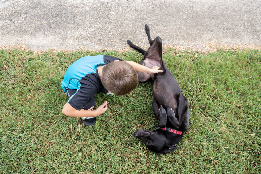 Love Childhood Dog Domestic Animals Grass Human Hand One Animal One Person Real People
