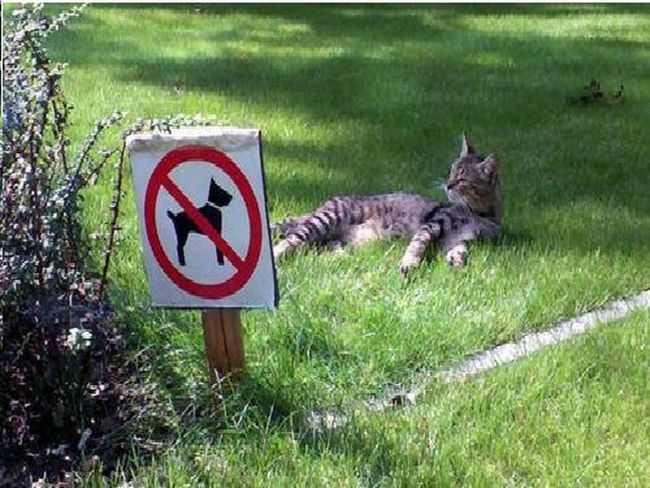 CAT CAN DO WHAT WANT Animal Themes Bird Day Grass Mammal Nature No People Outdoors