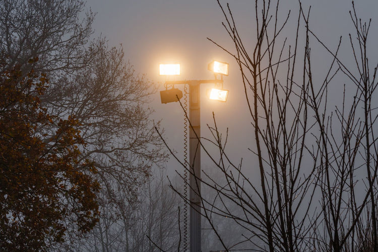 Illuminated floodlights amidst trees in foggy weather