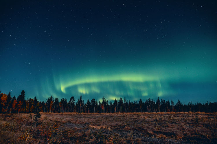 Last night aurora show Aurora Borealis Autumn Beautiful EyeEm Nature Lover EyeEm Gallery Finland Lapland Nature Photography Northern Lights Astronomy Beauty In Nature Forest Landscape Nature Nature_collection Night No People Outdoors Photography Sky Space Star - Space Tranquil Scene Tranquility Tree EyeEmNewHere A New Beginning