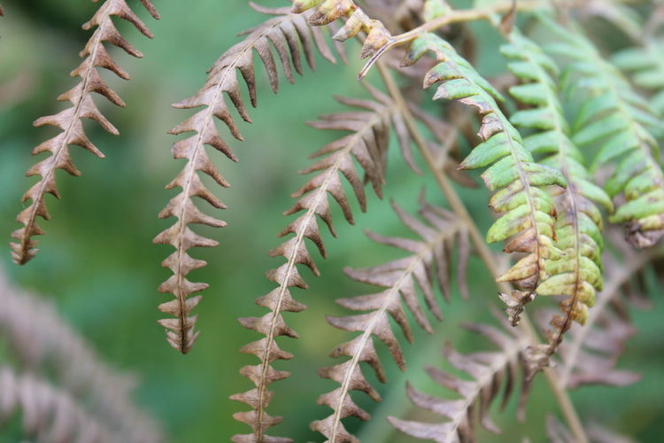 Close-up Growth Nature Focus On Foreground Selective Focus Outdoors Uncultivated Beauty In Nature Fern Countryside