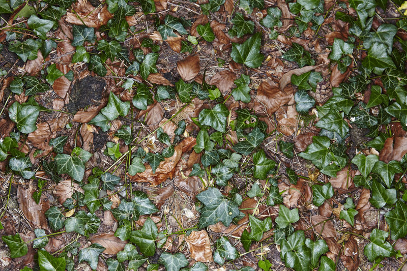 Ground floor. Dark WoodLand Backgrounds Beauty In Nature Brown Close-up Dead Leaves Dry Field Flash Photography Floor Fragility Full Frame Green Color Ground Growth High Angle View Ivy Leaf Nature No People Outdoors Plant Sinister Surreal