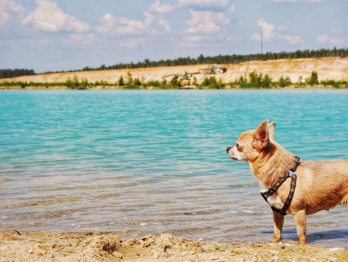 Side view of dog on the beach