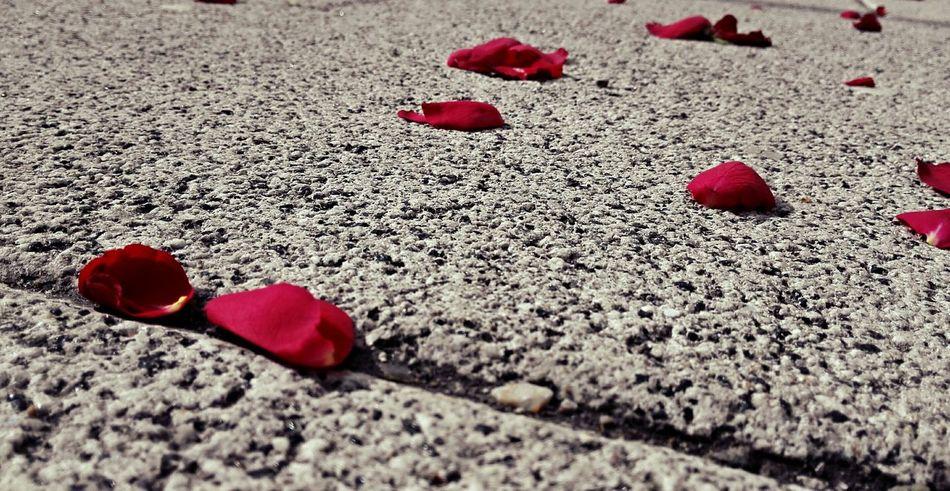 Street Roses Rose🌹 Streetphotography Daylight On A Walk