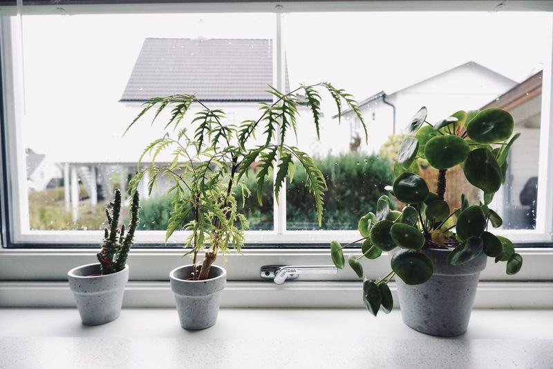 Close-up of potted plants on window sill